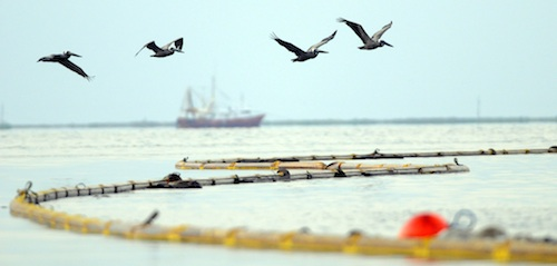 Boom and skimmers line the coast at Grand Isle, La., where workers clean up BP Deepwater Horizon oil disaster.