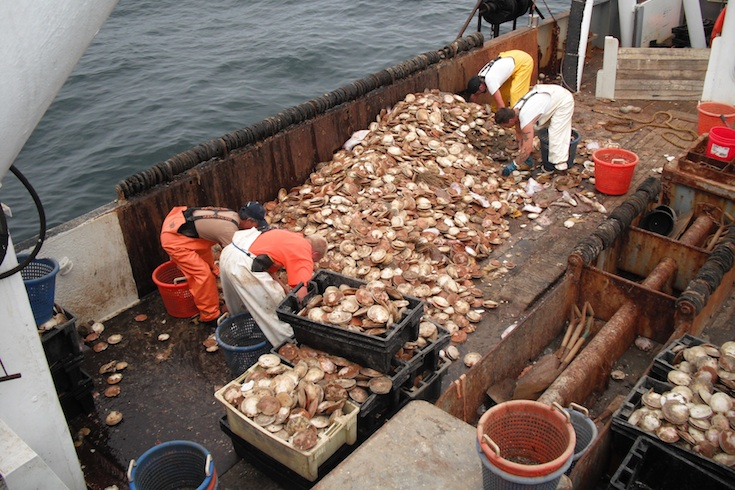 fishermen load scallops onto a boat