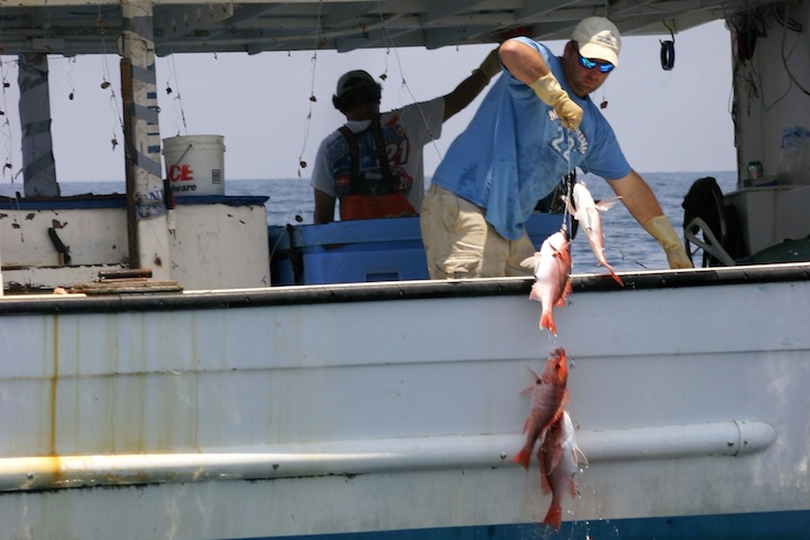 A fisherman catches red snapper