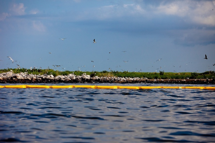 Seabirds in the Gulf are threatened by oil from the BP spill.