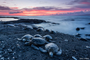 "Judges' Choice: Ian Lindsey, ""Honu Gathering"""