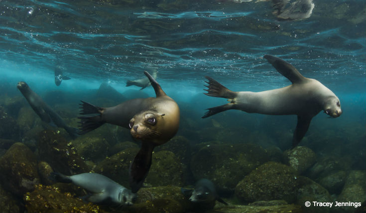 How to Tell the Difference Between a Seal and a Sea Lion