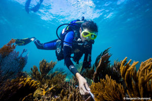 USGS oceanographer Kim Yates installs tubing to compare the ocean chemistry in different parts of a coral reef 2 (1)